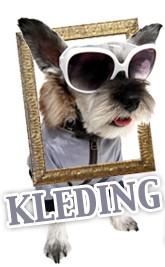 Hondenkleding: niet alleen leuk maar ook functioneel - berichtafbeelding